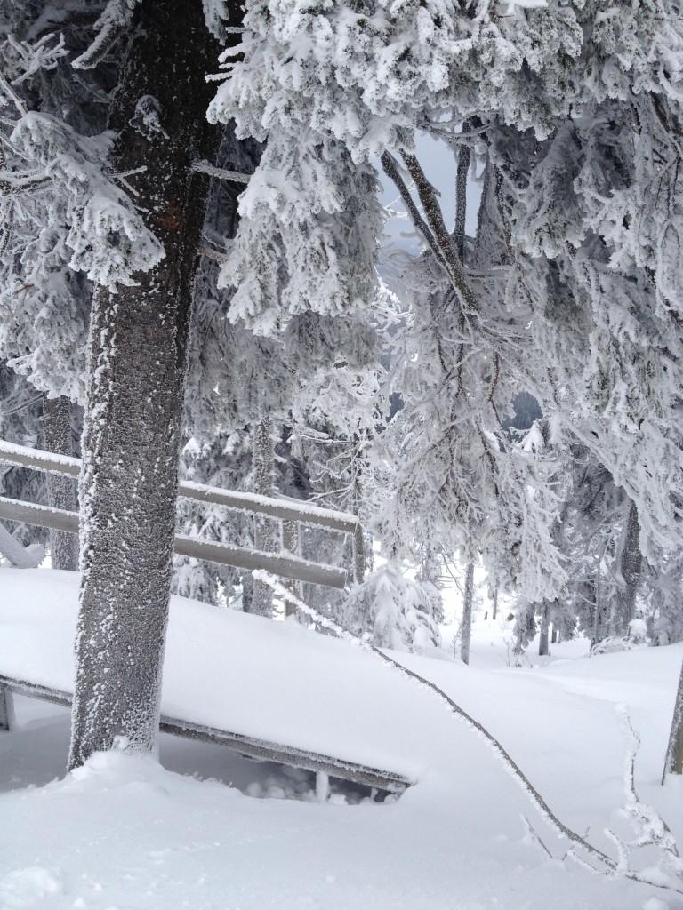Arlberg 2013 (1)