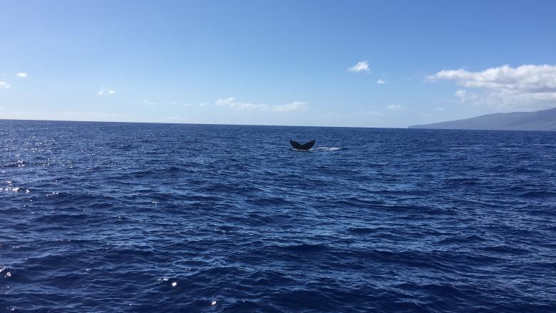 Maui Insider Tipps Erlebnis