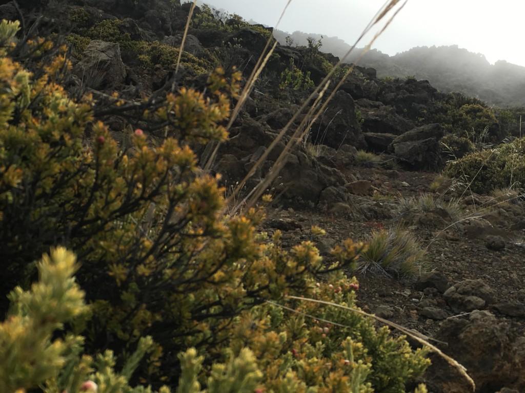 Maui Insider Tipps Fotolocations
